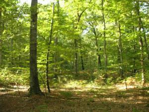 Forêt de Tronçais